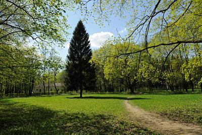 Усадьба Сузаново Россия Московская область Суханово весна