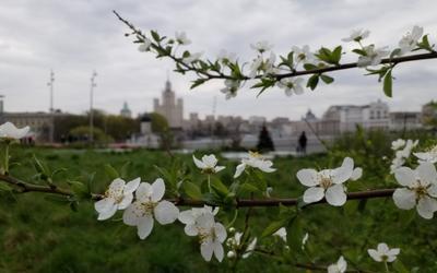 *Из Москвы с любовью..*