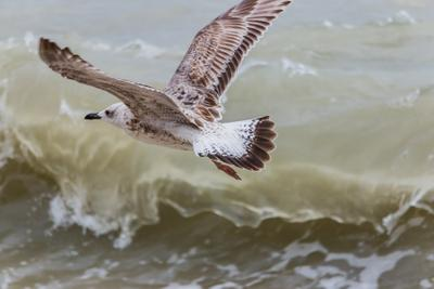 Чайка море чайка