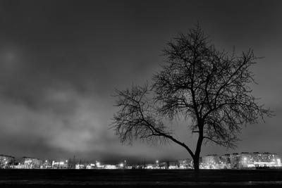 Городское дерево...