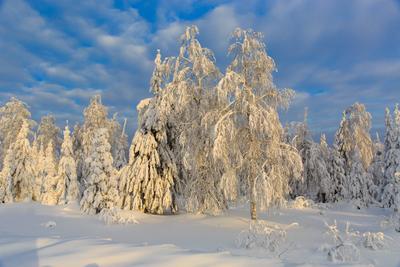 Вечереет** лес снег зима