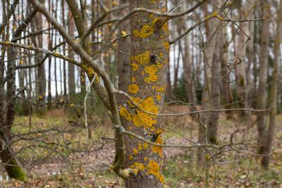 Абстрактная картина природными красками на дереве-холсте дерево природа абстракция картина лес мох wood nature paint