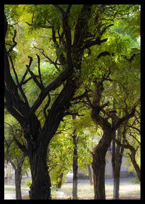 Древесность деревья природа