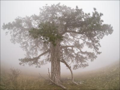 Из сказки Крым туман лес Ялта