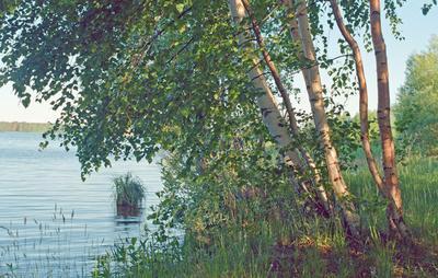 прибрежное Волга  утро