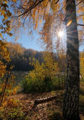 Свет осени моей осень золотая октябрь берег реки солнечный свет