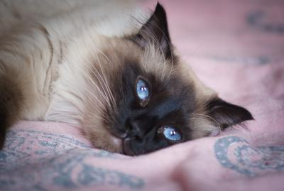 на  самоизоляции котики коты самоизоляция