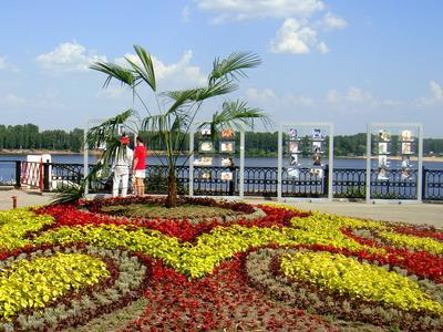 Пальма на Волге Ярославль, Волга, пальма