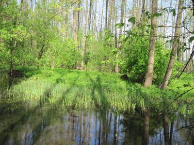 лесные тени