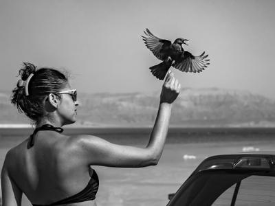 Отдай!.. птицы люди море удачный момент
