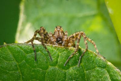 В ожидании добычи Паук макро насекомые крупный план