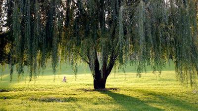 Под деревом
