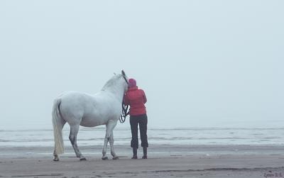 Прогулка двух дргзей конь животные берег осень туман