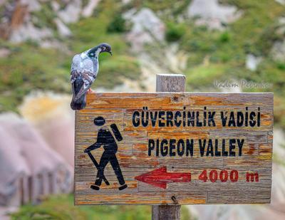 Хозяин Каппадокия Турция туризм треккинг спорт прицы голубь указатель