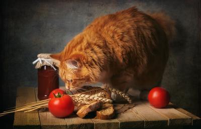 Рыжий кот и помидоры натюрморт композиция постановка сцена кот питомец любимец помидоры хлеб