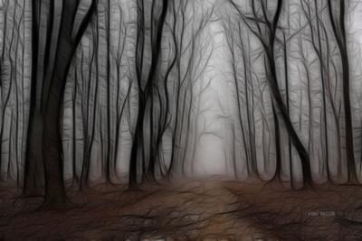 Мрачный лес. Алексей Беляев alexbell30 Фракталы Аллея Темный лес туман