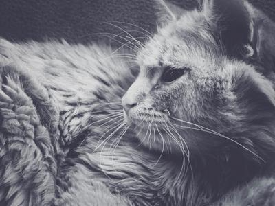 Загадка Кот