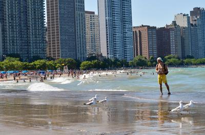 Даже чайки гуляют парами. Чикаго город волны чайки птицы берег набережная мегаполис