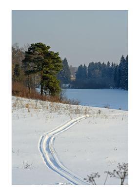*** озеро лес сосна лед снег