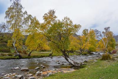 у реки Горный Алтай пейзаж реки Ильгумень nataly-teplyakov