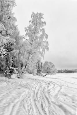*** лес зима снег иней деревья