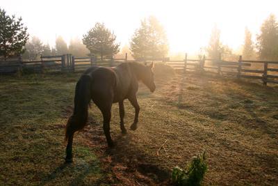 Кобыла черная кобыла лошадь левада осеннее утро лёгкий туман
