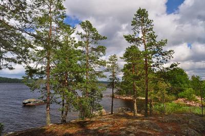 «Чем жарче день, тем сладостней в бору...» сосны скала озеро Сайма pine Saimaa Finland