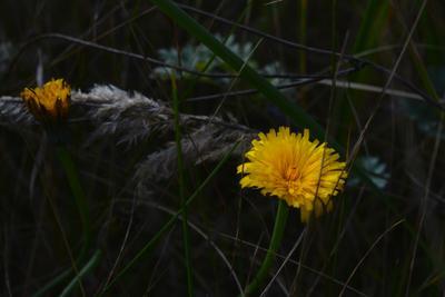 Осенний солдатик Осень природа цветок желтый