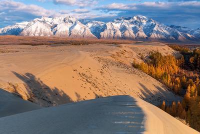 О ТАЙГЕ, ГОРАХ И ПУСТЫНЕ. Забайкалье Чарские Пески Кадарский хребет осень Горы Лиственница