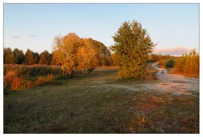"""Осенний """"пожар"""" осень вечер золотая"""