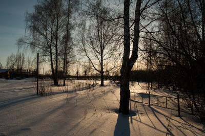 Зимний вечер Зима деревья вечер закат темнеет вечереет