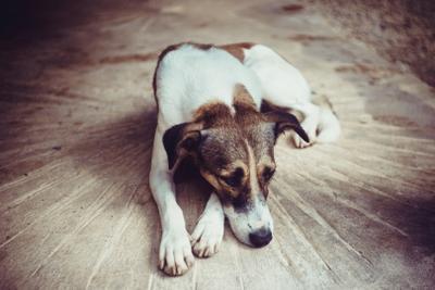 Мексиканская собака собака мексика геометрия