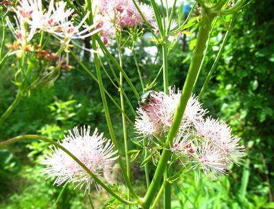 На солнце жук цветы