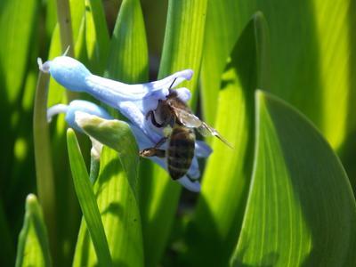 ***Пчелиная работа***