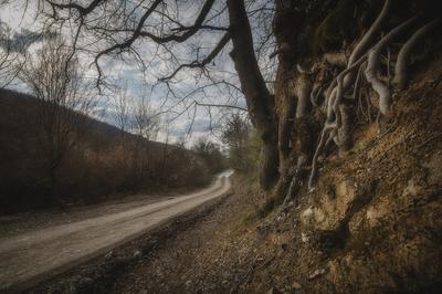 Окрестности Терновки Лес дорога пейзаж
