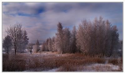 Ледяной сон снег береза зима холод иней