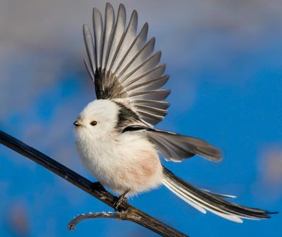 Ополовник птицы природа зима весна лес