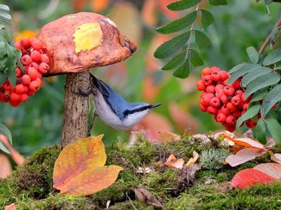 В осеннем лесу природа птицы фотоохота поползень осень грибы