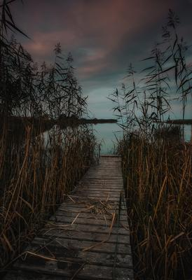 На мосту Природа пейзаж мост залив