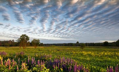 Утренняя нега небо рассвет цветы поле лето