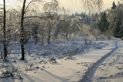 Лед и пламень березы, вечер, дорога, закат, зима, лед, лес, пейзаж, подмосковье, снег, тропа, январь