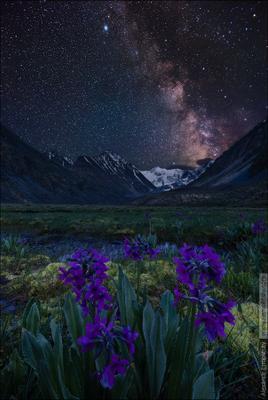 ~ Кара тюн ~ Altai Алтай