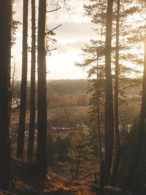 *** обнинск закат лес церковь река холм сосна поле