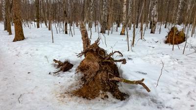 Житель леса сегодня... Москва лесопарк Лосиный остров