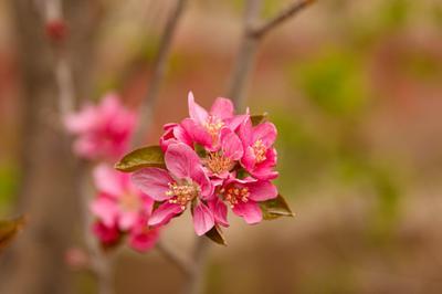 Весна, весна...