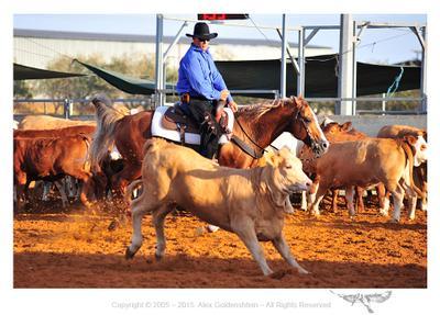 Cutting 2015 NRHA 2015 cutting Alex Goldenshtein Western Horse