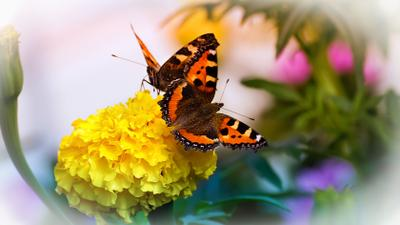 *** цветок бабочка