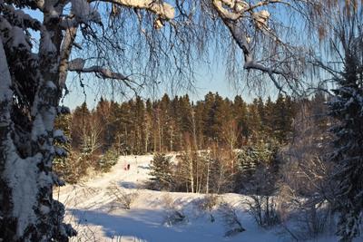 погода была прекрасная) зима природа лес мороз прогулка снег солнце тени ели сибирь