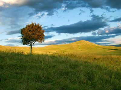 рыжая осень дерево небо горы