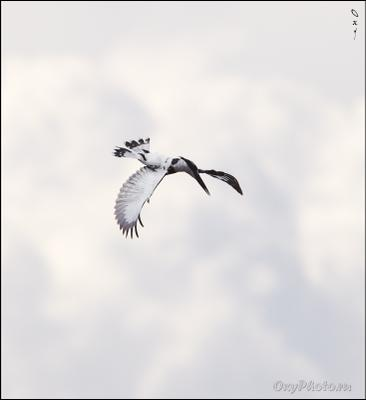 Воздушный гимнаст... Africa, Uganda, Африка, Уганда, Виктория-Нил, Victoria-Nile, Nile, Нил